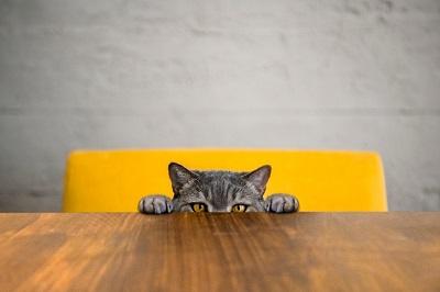 body-why-cat-02.jpg